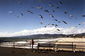 Feeding seagulls on Santa Monica Pier - Law Offices of William E. Maguire, Specializing In Trademark and Copyright Law, TrademarkEsq, TMEsq